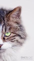 888790772297814596++ (Kerchak) Tags: cat cats straycat meow