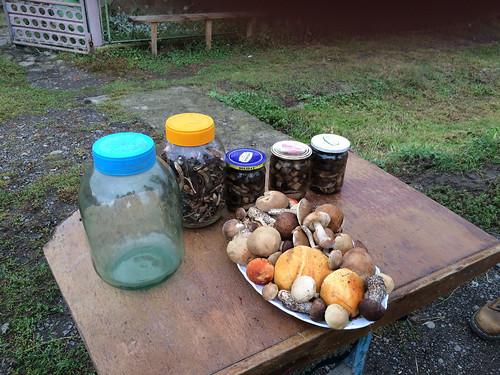 Mushrooms by locals