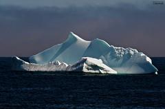 Iceberg #44 (le Brooklands) Tags: blue bonavista capebonavista d7000 hdrphotographic iceberg sigma70200mm spillarscove white