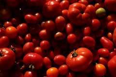Tomatoes (Klaudia D. P.) Tags: red colors color colorful fruit plant summer fall garden autumn closeup shiny bright light shadow tomato tomatoes cooking food