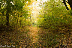 The light shines in the darkness (david_law44) Tags: lincoln memorial gardens trail trees leaves color light sun shine