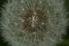 2016_05_16_03528 (bencze82) Tags: sástó mátra magyarország hungary tavasz spring canon eos 700d voigtländer apolanthar 90mm f35 slii természet nature