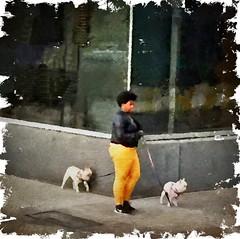 Walking the dog... (Sherrianne100) Tags: streetscene walkingthedog sidewalks thebigapple newyorkcity nyc ny