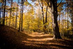 untitled (Homemade) Tags: sonydscrx100 fall fallcolors autumn autumncolours goldensbridge lewisboro westchestercounty newyork ny trees woods leaves trail