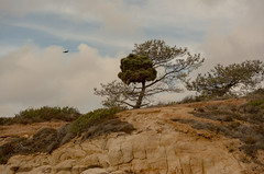 Torrey Pines Park-10.jpg (Mike_Simons) Tags: california sandiego citiesplaces nature torrey pines californiasan diego torreypines