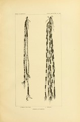 n124_w1150 (BioDivLibrary) Tags: antiquities indianart indians shellsinart smithsonianlibraries bhl:page=11258725 dc:identifier=httpbiodiversitylibraryorgpage11258725 manyhatsofholmes wampum artist:name=katecliftonosgood taxonomy