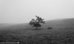 A foggy day in late October 2. (andreasheinrich) Tags: landscape tree field fog autumn morning october blackandwhite blackandwhitephotos germany badenwürttemberg neckarsulm dahenfeld moody cold deutschland landschaft baum feld nebel herbst morgen schwarzweis düster kalt nikond7000