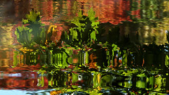 Nature's Ever-Changing Autumn Artwork (jrussell.1916) Tags: leaves reflections ripples lakes autumncolors autumn abstract illuminated nature natureasabstract canonef70200f4lis14tc