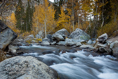 _MG_1468.jpg (Chris Murdoch Photography) Tags: aspen aspens aspensinfall autumn california chrismurdoch chrismurdochphotography easternsierrarivers easternsierrabishopcanyon fall fallphotography flowingwater river rivers seasons southlake usa