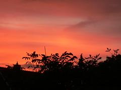 room with a sunset view (achatphoenix) Tags: tree sun horsechestnuttree home sunset sky evening coucherdusoleil arbre soir soleil eastfrisia