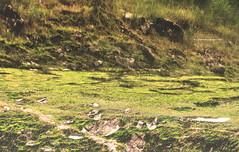 Reflection, Upside Down World(Inverted Image)....Songluo Lake......松蘿湖的顛倒世界,倒影。 (Evo-PlayLoud) Tags: canoneos550d canon550d canon 550d efs18135mmf3556 efs 18135mm 18135mmkit landscape scenery restaurant lake upsidedown grass grassland green mountain mountains dslr water 松蘿湖 反射 倒影 ivertedimage inverted taiwan newtaipeicity 新北市 台灣 風景 綠色 綠意 草 草地 顛倒 反轉 顛倒世界 綠地 山 高山 湖泊 湖岸 lakeside lakeshore 湖岸線 stone 石頭 單眼 風景照 invertedimage