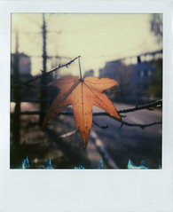 Outskirts (Aschenbachster) Tags: polaroid sx70 impossiblefilm impossibleproject milan outskirts