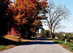 fall colors / mamiya m645 (bluebird87) Tags: fall maple road mamiya m645 film dx0 c41 epson v600 kodak ektar 80mm barn