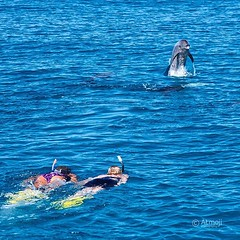 So excited to meet each other - the beauty of the Human-Dolphin connection in the wild. #wilddolphins #wildquest #wildandfree #dolphins #photooftheday #humandolphinconnection @atmoji