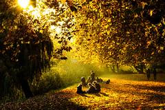 golden october (LiterallyPhotography) Tags: herbst gemälde golden farben licht trauerweide tübingen oktober