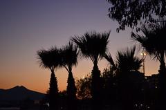 İzmir-Turkey (Betül DOĞAN) Tags: sky palmas sunset puestadelsol turkey türkiye izmir light luz landscape outdoor