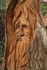Weathering in nicely (Geoff_B) Tags: badockswood bristol walkinthewoods autumn november unprocessed unedited