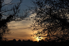 Riddlesdown Sunset 4 (Chris Sinfield) Tags: colours skies sun sunset riddlesdown uk visituk visitsurrey surrey hills trees downs england countryside travel sky clouds tree plant plants landscape glowing inspiration beauty natural foliage flickr photography canon canon700d europe