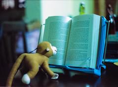 When monkeys read books (Himanshu Joshi Bangalore) Tags: cinestill 800 iso film filmcamera ishootfilm colours cosina cosinact1super c41 pentax 50mm f20 analog 35mm
