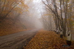Misty road in beech wood (Kaiser Sozo) Tags: crimea mountain slope autumn fall fallenleaves leaves fog mist road wood beech trunk aipetry
