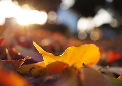 autumn morning (chisato tanaka) Tags: autumn leaves 葉 秋 leaf