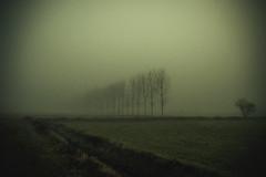 (trevis_lu) Tags: photo landscape paesaggio campagna countryside winter inverno nebbia fog mist nikondf nikkor35mmf18