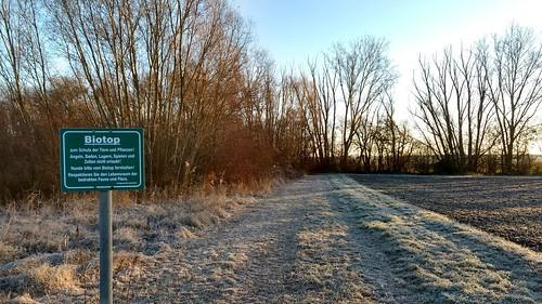 Biotop an der Selz bei Hahnheim