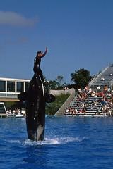 San Diego - Sea World (astroaxel) Tags: usa kalifornien san diego sea world orca killerwal wal show