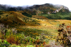 Cloud Forest (1) (Mahmoud R Maheri) Tags: landscape mountain andes andean ecuador green valley trees clouds southamerica ecuator cloudmountain quito
