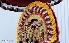 (Joevimalraj) Tags: flowers car canon temple switzerland god swiss goddess marriage joe garland procession 1855 hindu tamil deity eveing 600d jvr