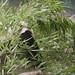 da mao the panda - toronto zoo - 04