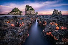 The Stars Emerge (Luke Austin) Tags: newzealand seascape starfish southisland