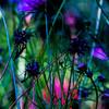 Les Fleurs du Mal (Jack o' Lantern) Tags: flowers welikeit masterphotos artonflickr world100f saariysqualitypictures floralaromas galleryoffantasticshots flickrheartgroup