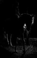 La Fort des Hesprides - Orfeu et Marie-Claude Bouillon (eburriel) Tags: shadow horse forest cheval photo circus performance ombre qubec cirque bouillon notredamedurosaire marieclaude questre centaure acrobatie 2013