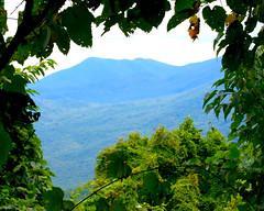 Window on the World (fillzees) Tags: blue mountain tree green nature forest landscape leaf framed vine foliage smoky smokies