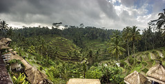 Impok_D130807T003337_ICT03060-030364 (Impok) Tags: indonesia tegallalangbali