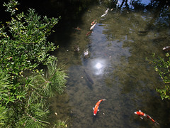 Kyoto Travel Carp (Hissyh2) Tags: japan kyoto olympus carp 12mm olympuspen ep3 鯉 olympuspenep3