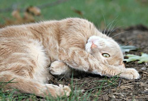 parent finder thorn russetstar warrior cats online