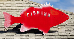 Red Snapper on Roof (photographyguy) Tags: roof gulfofmexico fishing florida redsnapper desting destinharbor