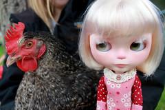 Real Wubba Chicken Wednesday!