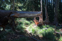 Bridge of sorts (rozoneill) Tags: friends mountains club oregon creek forest river hiking north boulder national steamboat wilderness umpqua calapooya wsweekly54
