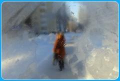 Frosty canvas. (halina.reshetova) Tags: blue winter brown white house snow black cold nature glass girl canon landscape frost snowy january buswindow wintertime coldweather midwinter winterscenery bittercold frostyweather patternsonglass canonpowershotsx130is 221213 frostycanvas