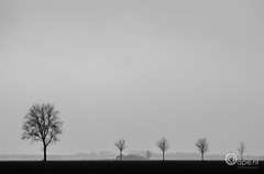 On children (Oape) Tags: trees bw tree nature dutch silhouette landscape scenery outdoor thenetherlands minimal