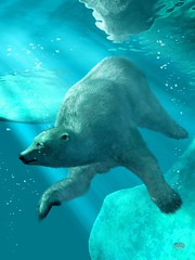 Polar Bear Underwater (deskridge) Tags: bear blue white cold animal animals divers underwater natural wildlife bears freezing conservation scuba arctic polarbear diver aquatic wilderness submerged explorers creatures creature frigid majestic polarbears climatechange beasts globalwarming bigbear whitebear swimmingbear eskridge endangers arcticbear danieleskridge underwaterbear