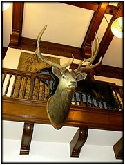 Sonnenberg Gardens & Mansion ~ Historic Park ~ Canandaigua NY ~ Interior (Onasill ~ Bill Badzo) Tags: park travel flowers ny gardens architecture vintage table head queenanne interior historic deer historical mansion setting fingerlakes canandaigua sonnenberg nrhp ontariocounty onasill