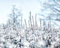 ice storm bokeh (-liyen-) Tags: winter white toronto ice dof bokeh branches icestorm 2013 challengeyouwinner nikond300