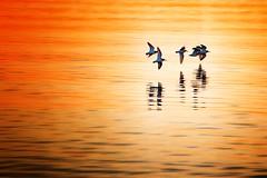 Water Skimming (steenowitz) Tags: bridge sunset orange sun sunlight snow newyork beach water bay purple longisland meltingsnow beachscape robertmoses greatsouthbay captreestatepark jonesbeachlongisland canonrebelt4i canonpowershotsx50hs