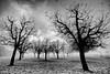 Rohrbach Trees (flowed_back) Tags: nature zeiss switzerland nikon rohrbach d800 leefilters zf2 distagont2821 mygearandme mygearandmepremium mygearandmebronze mygearandmesilver mygearandmegold mygearandmeplatinum mygearandmediamond leeproglass06nd {vision}:{mountain}=0591 {vision}:{outdoor}=0963 {vision}:{sky}=0667 leeplcir