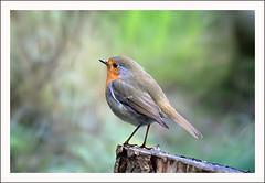 A Robin, again :-)