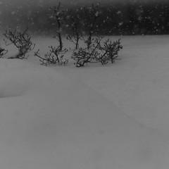 Quietness (_kaochan) Tags: blackandwhite bw snow 6x6 monochrome square panasonic squareformat dmcfz200 panasonicdmcfz200 lumixdmcfz200